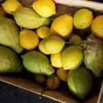 Norddeutsche Zitronen